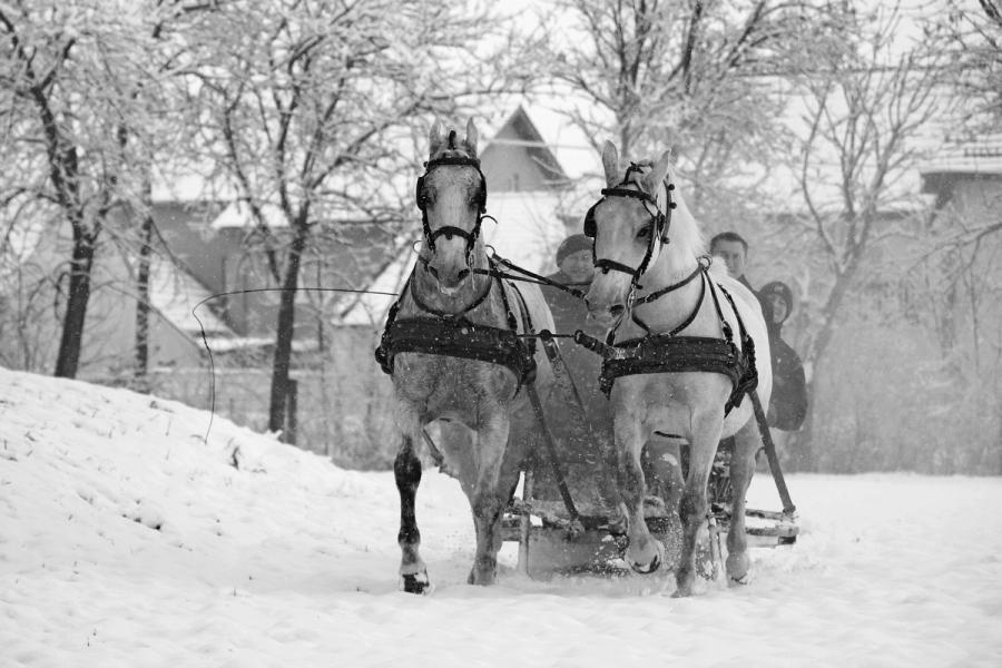 Slavonska zima