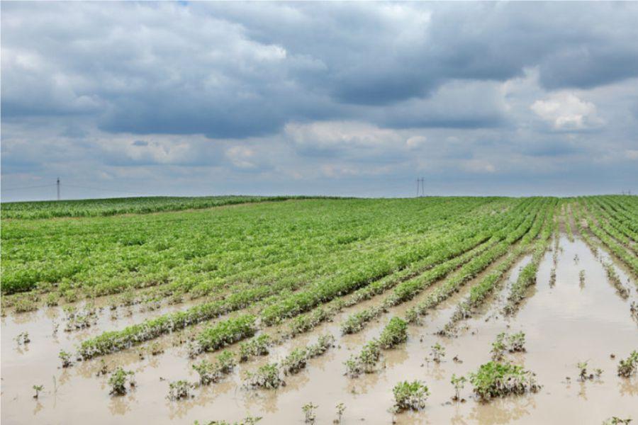 Objavljen 8. natječaj za obnovu poljoprivrednog zemljišta i proizvodnog potencijala