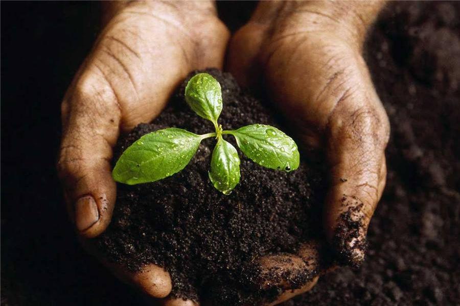 ARLA: Razmjenom sjemena do svijesti o zaštiti okoliša