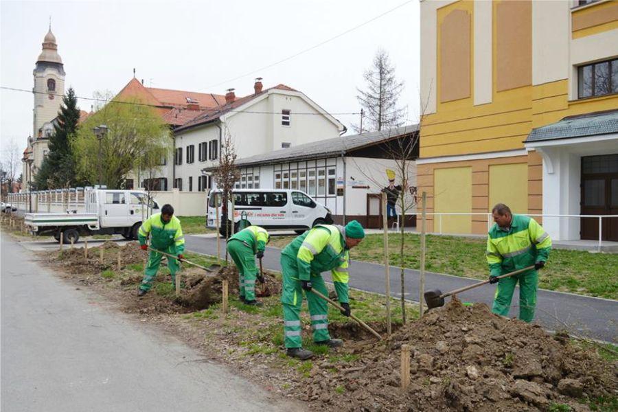 Univerzal zasadio novi drvored u Ulici kralja Tomislava