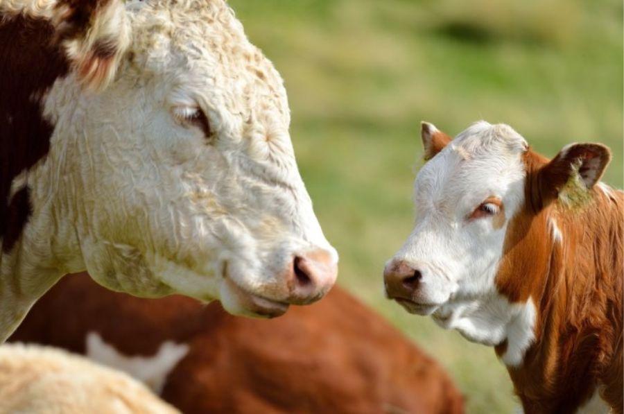 OBŽ i Zaba osigurali povoljnije kredite za proljetnu sjetvu i stočarsku proizvodnju