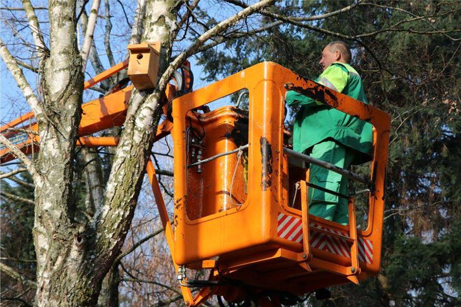 Ekonomac Marin Vitman inicirao postavljanje kućica za ptice