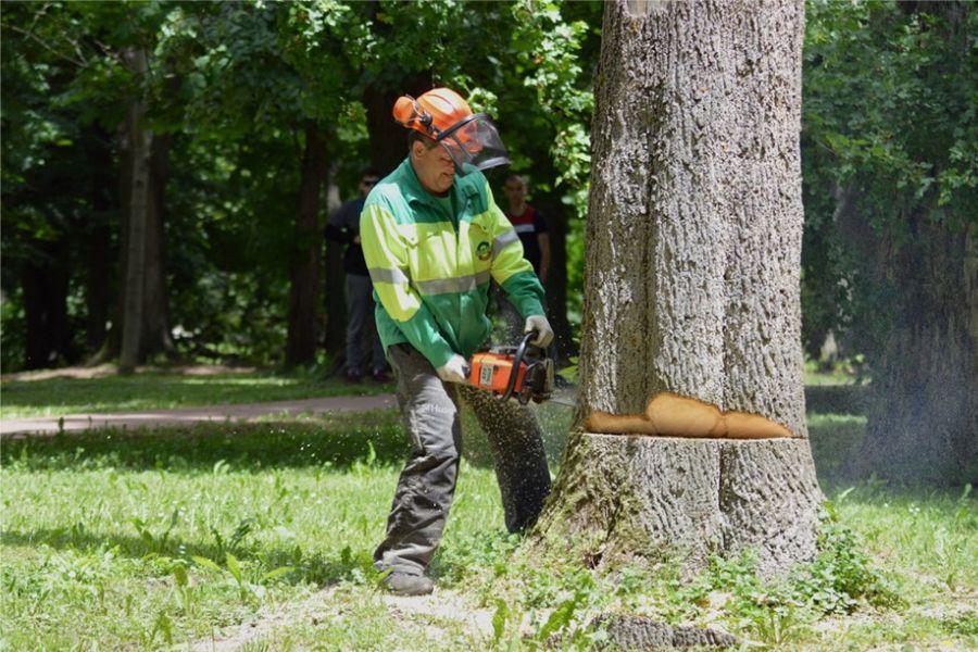 Komunalni radnici srušili prvih 20 suhih stabala