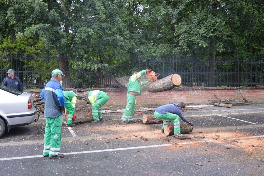 Ponovno palo stablo, nastavlja se sječa suhog i opasnog drveća