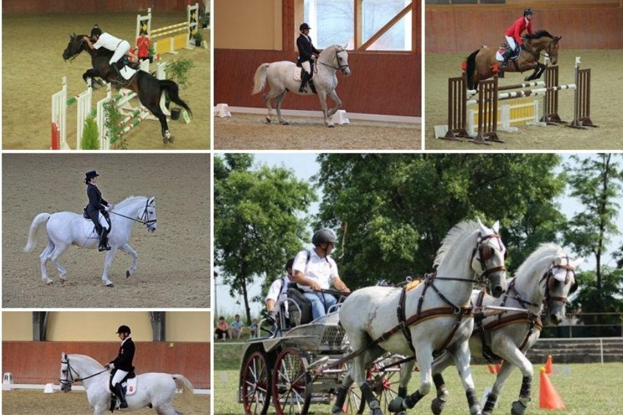 Konjička natjecanja na Ergeli Đakovo