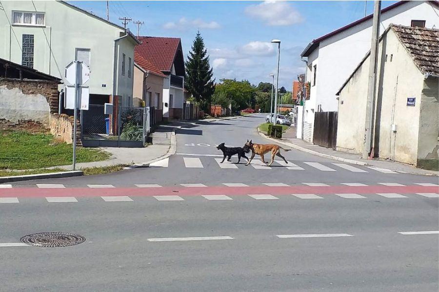 Priopćenje za javnost – problematika pasa na gradskim ulicama