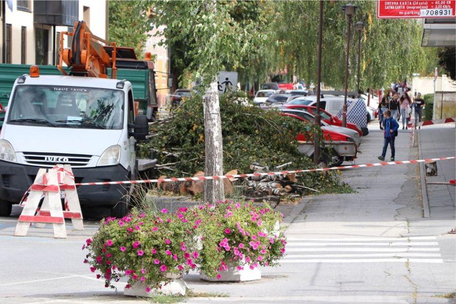 Umjesto breza u Tomislavovoj uskoro novo drveće