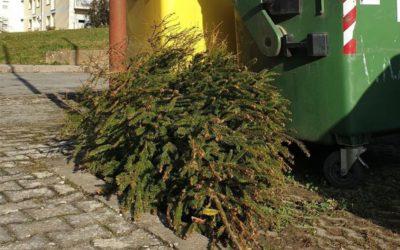 Odvoz isluženih božićnih drvaca  9. i 10. siječnja