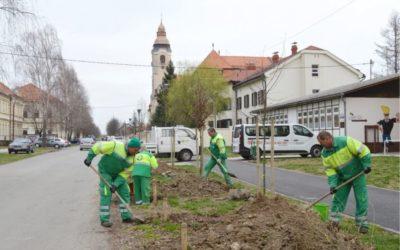 Uklanjanje breza na području grada Đakova