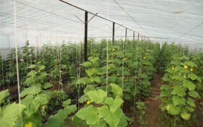 Uputa o radu vrtnih centara, rasadnika i prodavaonica za poljoprivrednu mehanizaciju