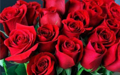 Ruže za sugrađanke
