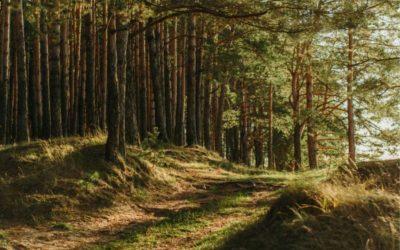 Objavljen novi natječaj za ulaganja u šumsku infrastrukturu vrijedan 60 milijuna kuna