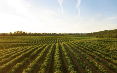 Novih 360 milijuna kuna pomoći poljoprivrednicima