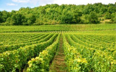 Odobreni destilateri za sudjelovanje u mjeri Destilacija vina u kriznim slučajevima