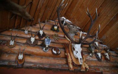 Ukradeno nekoliko trofeja divljači iz Lovačkog društva Đakovo