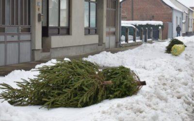 Počinje odvoz isluženih božićnih drvaca