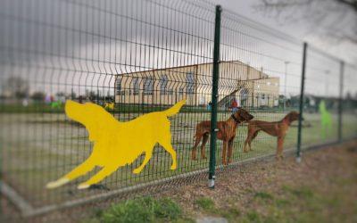 [ANKETA] Treba li u Đakovu napraviti park za pse?