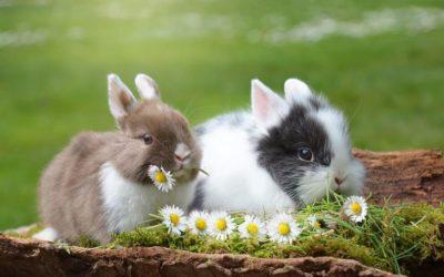 Prvi jesenski izložbeno-prodajni sajam Udruge za uzgoj i zaštitu malih životinja Vrpolje