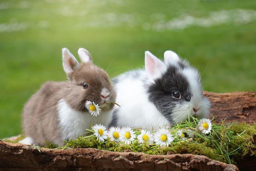 Male životinje_Foto_Piqsel